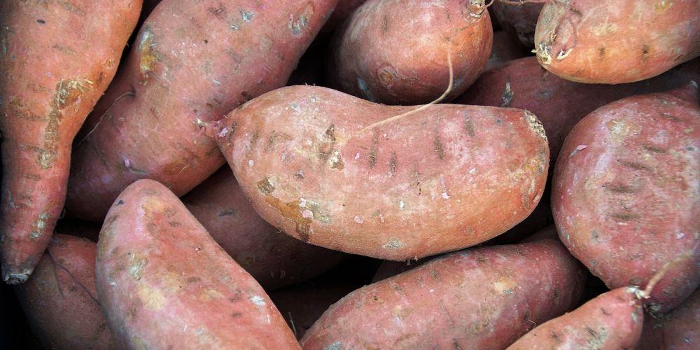 bataat / zoete aardappel